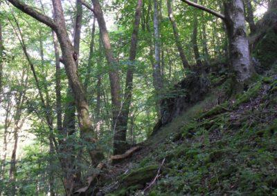 Forrest hiking